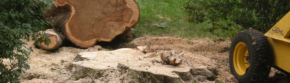 Aspen Tree Experts 613-277-2147